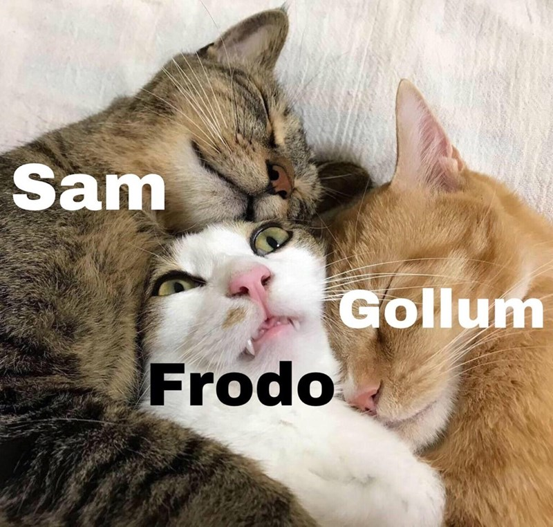 LotR meme about Frodo being liked by everyone with picture of cats