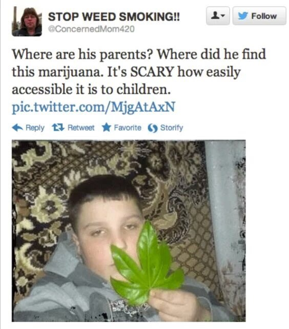 tweet post about a kid holding a leaf that resembles marijuana