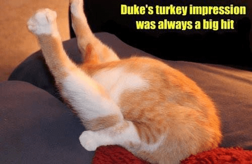 cat meme - Cat - Duke's turkey impression was always a big hit