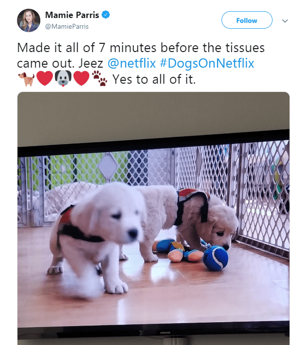 netflix dogs - Dog - Mamie Parris Follow @MamieParris Made it all of 7 minutes before the tissues came out. Jeez @netflix #DogsOn Netflix Yes to all of it.