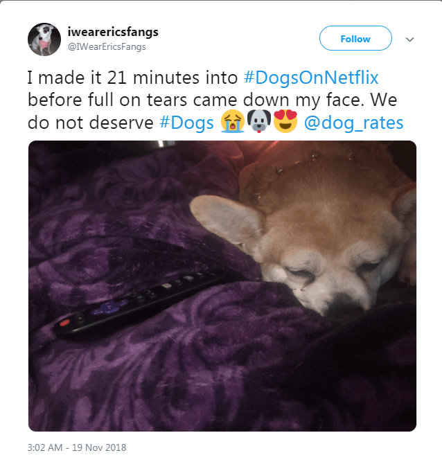 netflix dogs - Text - iwearericsfangs Follow @IWearEricsFangs I made it 21 minutes into #DogsOnNetflix before full on tears came down my face. We do not deserve #Dogs @dog_rates 3:02 AM 19 Nov 2018