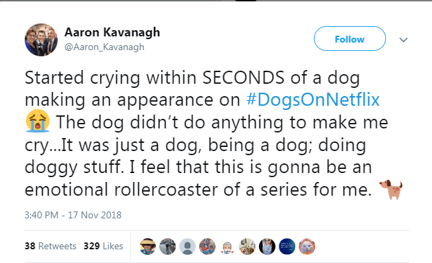 netflix dogs - Text - Aaron Kavanagh Follow @Aaron_Kavanagh Started crying within SECONDS of a dog making an appearance on #DogsOnNetflix The dog didn't do anything to make me cry...It was just a dog, being a dog; doing doggy stuff. I feel that this is gonna be an emotional rollercoaster of a series for me. 3:40 PM - 17 Nov 2018 38 Retweets 329 Likes
