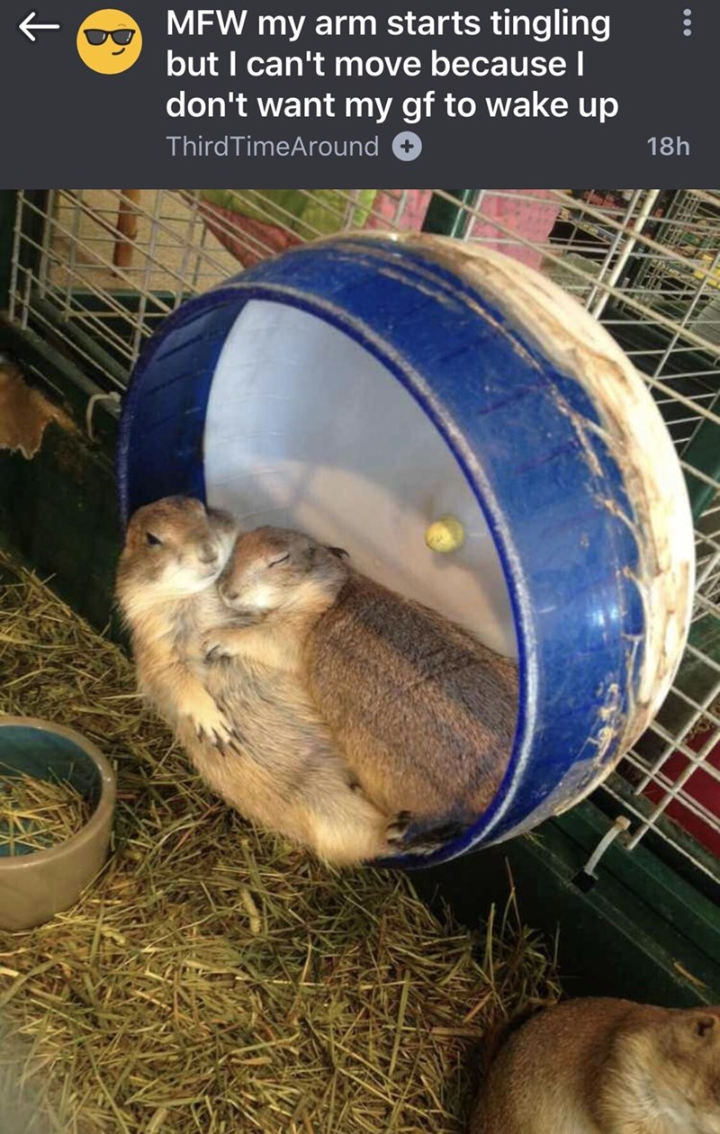 meme about 2 hamsters that are sleeping on top of each other