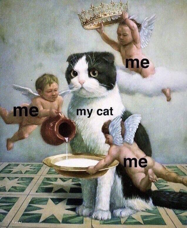 cat meme about treating your cat like royalty