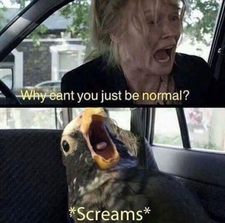 meme about not being normal and a bird screaming
