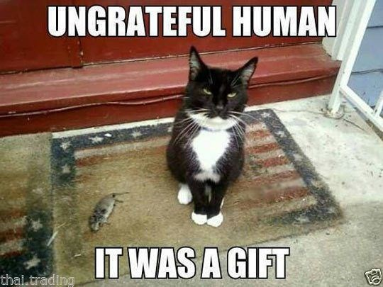 Cat - UNGRATEFUL HUMAN IT WAS A GIFT thai.trading