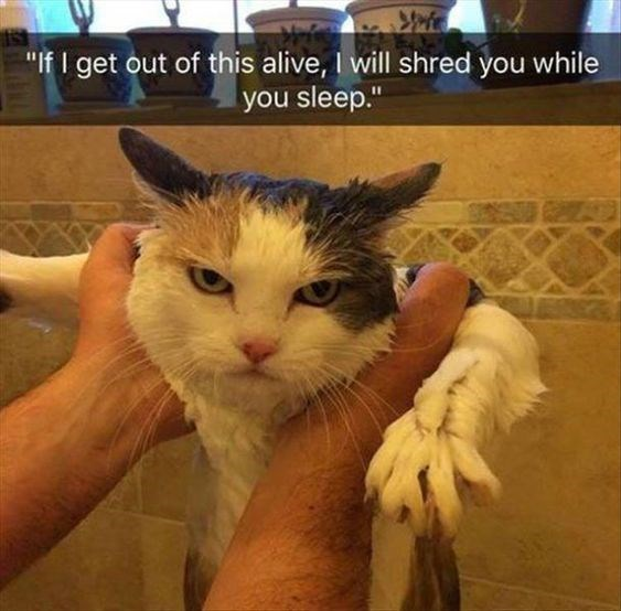"Cat - ""If I get out of this alive, I will shred you while you sleep."""