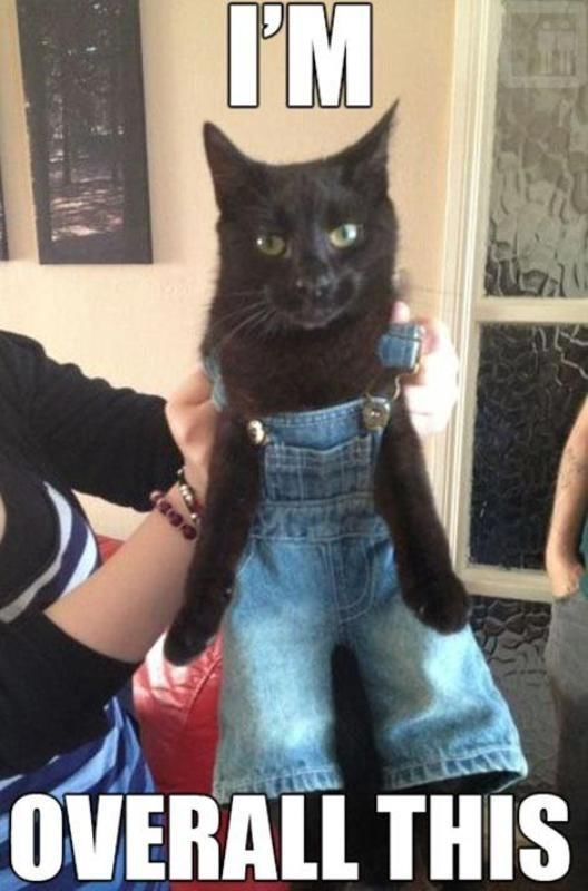 Cat - I'M ГМ. OVERALL THIS