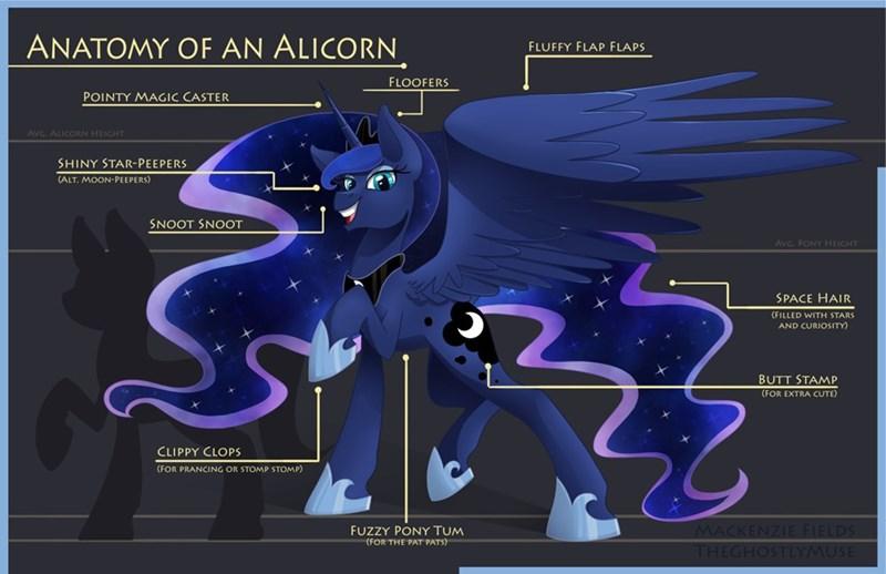 anatomy Memes princess luna the ghostly muse - 9240322304