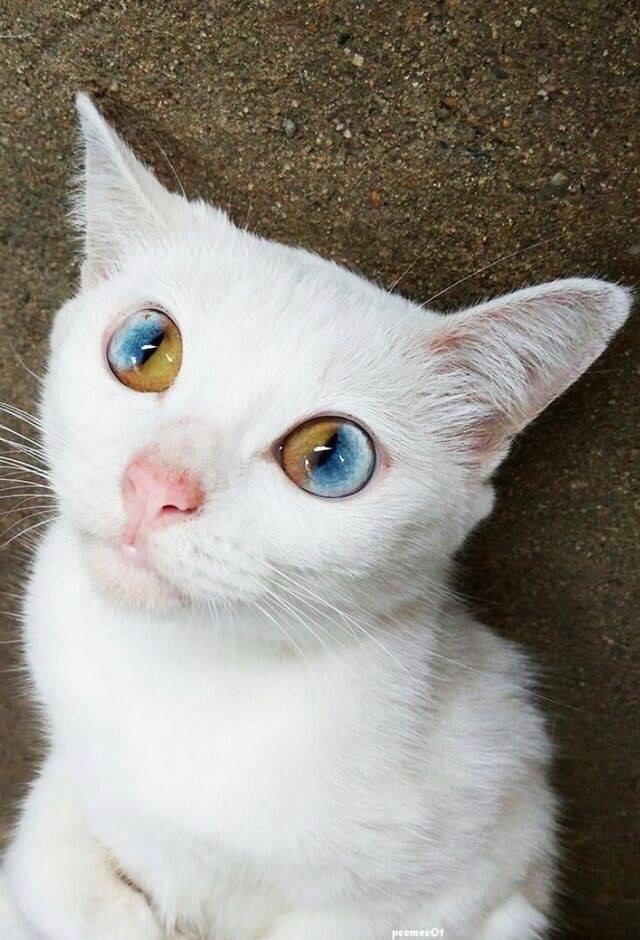 cat eyes unique beautiful - 9240838912