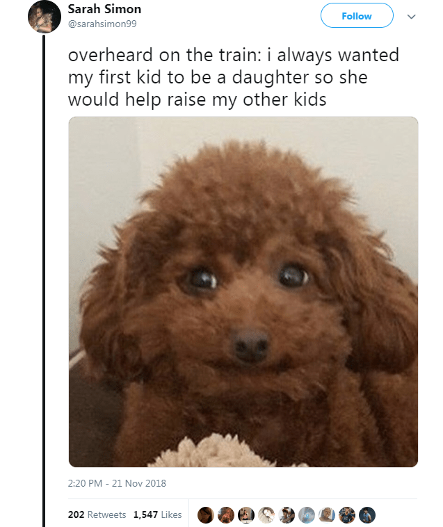 Dog - Sarah Simon Follow @sarahsimon99 overheard on the train: i always wanted my first kid to be a daughter so she would help raise my other kids 21 Nov 2018 2:20 PM 202 Retweets 1,547 Likes