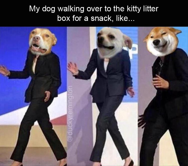 Theresa May dancing meme about dogs eating cat poop
