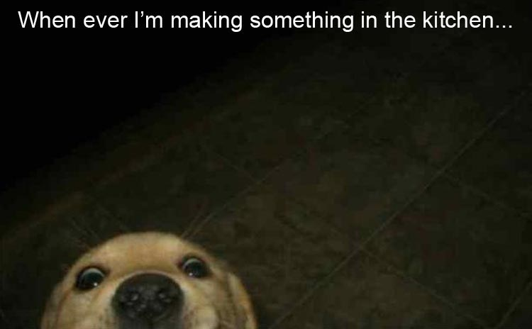 dog peeking from bottom of picture as if it's watching you prepare food