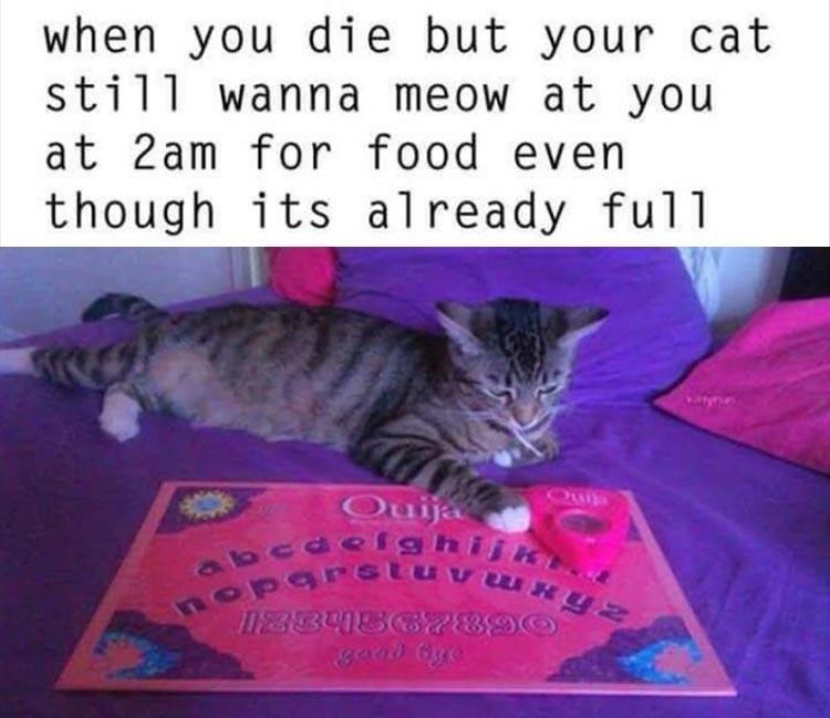 Cat - when you die but your cat still wanna meow at you at 2am for food even though its already full Ouija ote abcaelshiik EBBUS 789 aAxmANsabdo