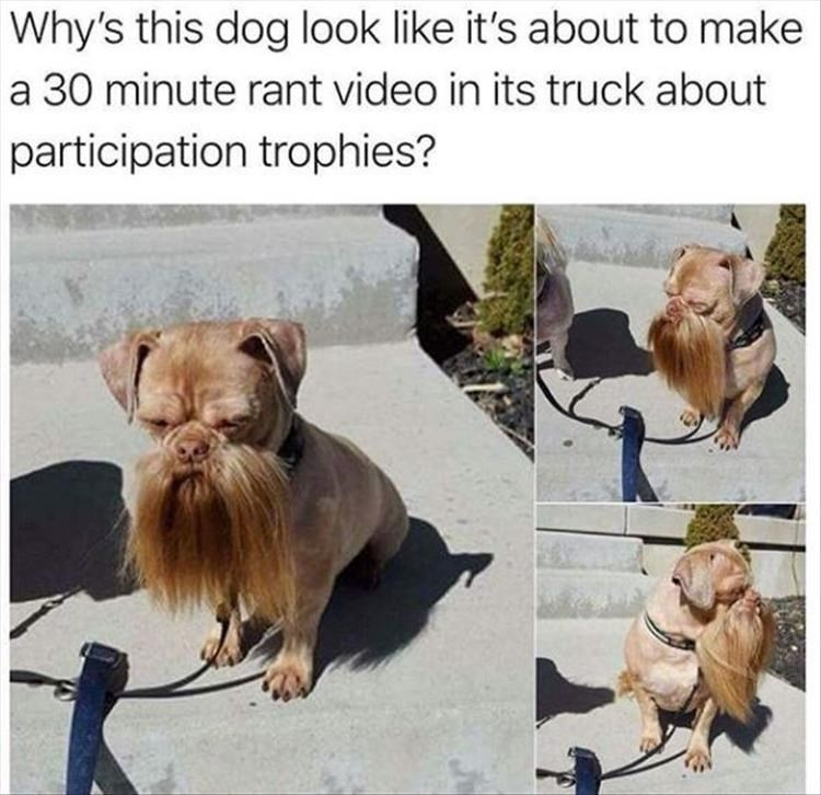 pictures of small dog with long beard and mustache looking like a redneck trucker