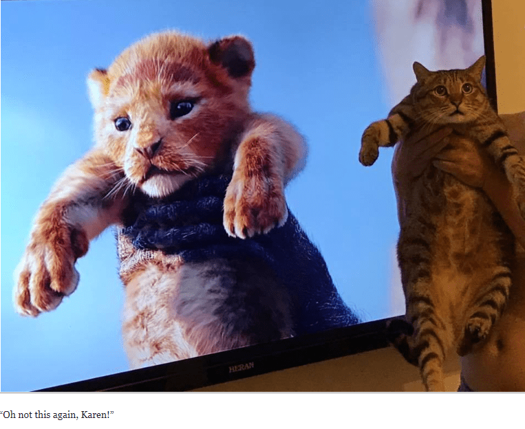 picture of cat being held up next to TV screen showing Lion King's Simba raised in the air in a similar way