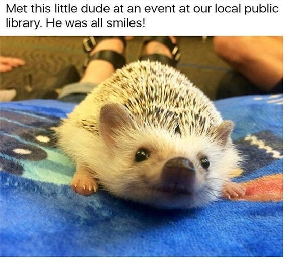 picture of hedgehog appearing to be smiling while looking up at camera