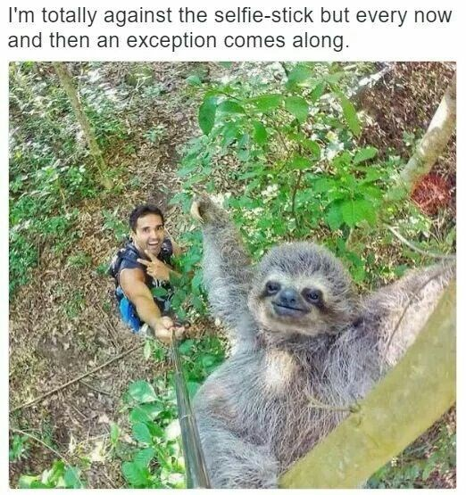 picture of man on the ground posing with sloth on top of tree using a selfie stick