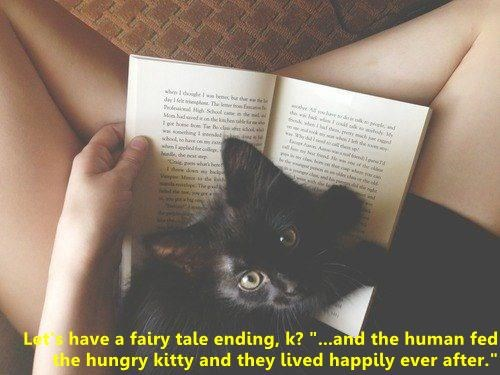 """cat meme - Cat - whe eebee burvc e e e loe The k owE Miode indde icen who7h de se ス T ww.bingem NH rs whepor asale he aoe ityTheelk Lethave a fairy tale ending, k? """"...and the human fed he hungry kitty and they lived happily ever after."""""""