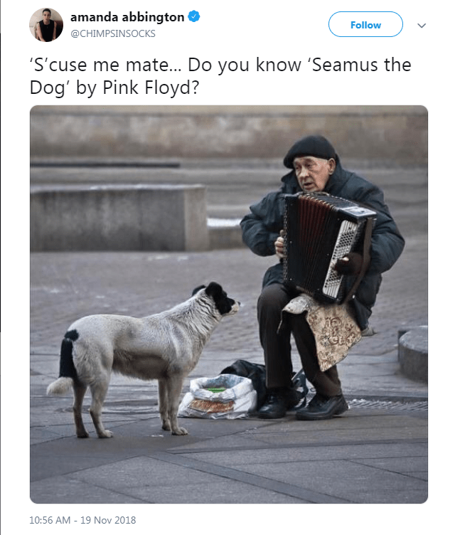 tweet with picture of dog standing in front of busker playing an accordion as if its requesting a song