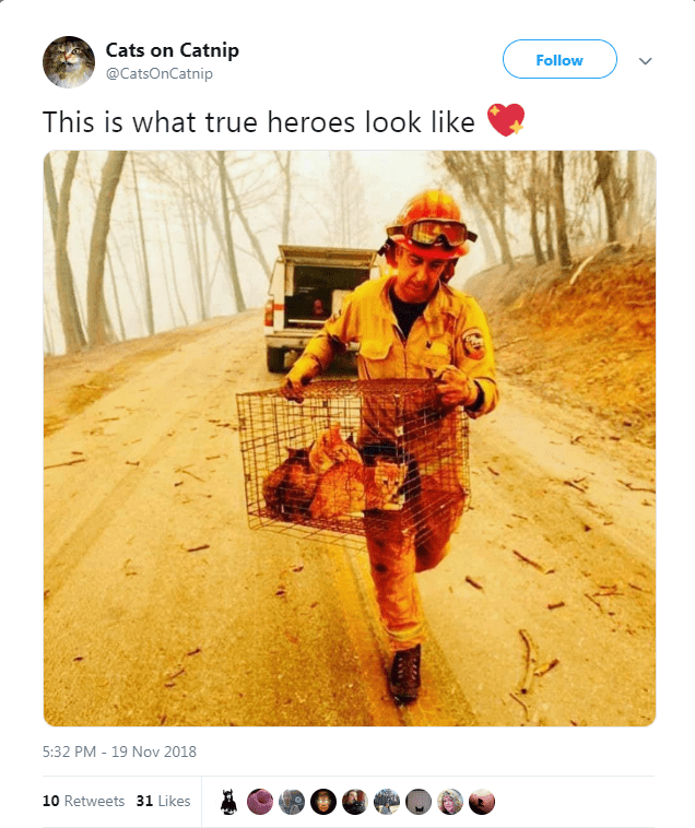 picture of fireman evacuating cats inside cage as a symbol of heroism