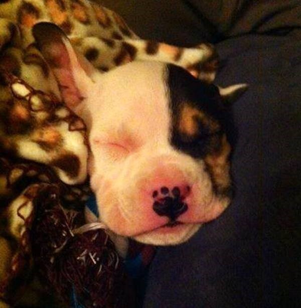 picture of puppy with nose markings in the shape of a paw