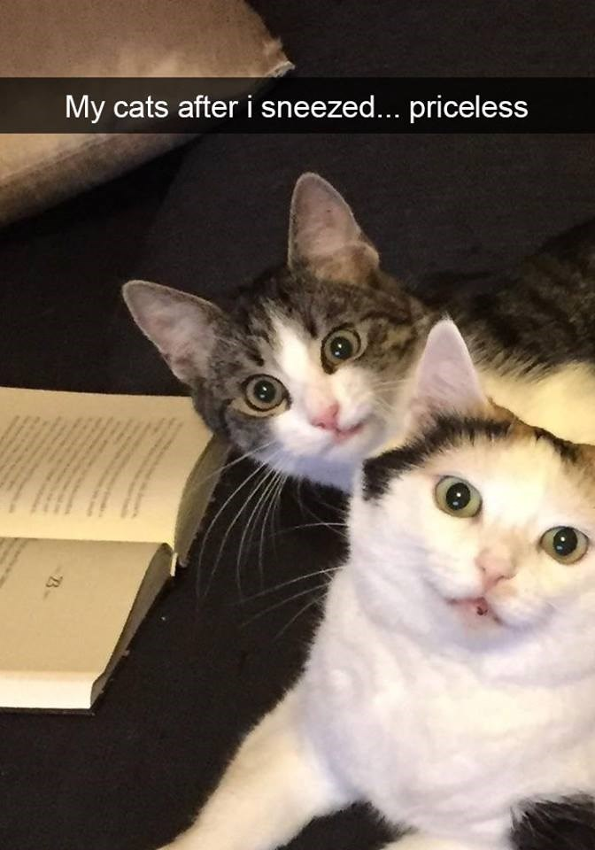 Cat - My cats after i sneezed... priceless B
