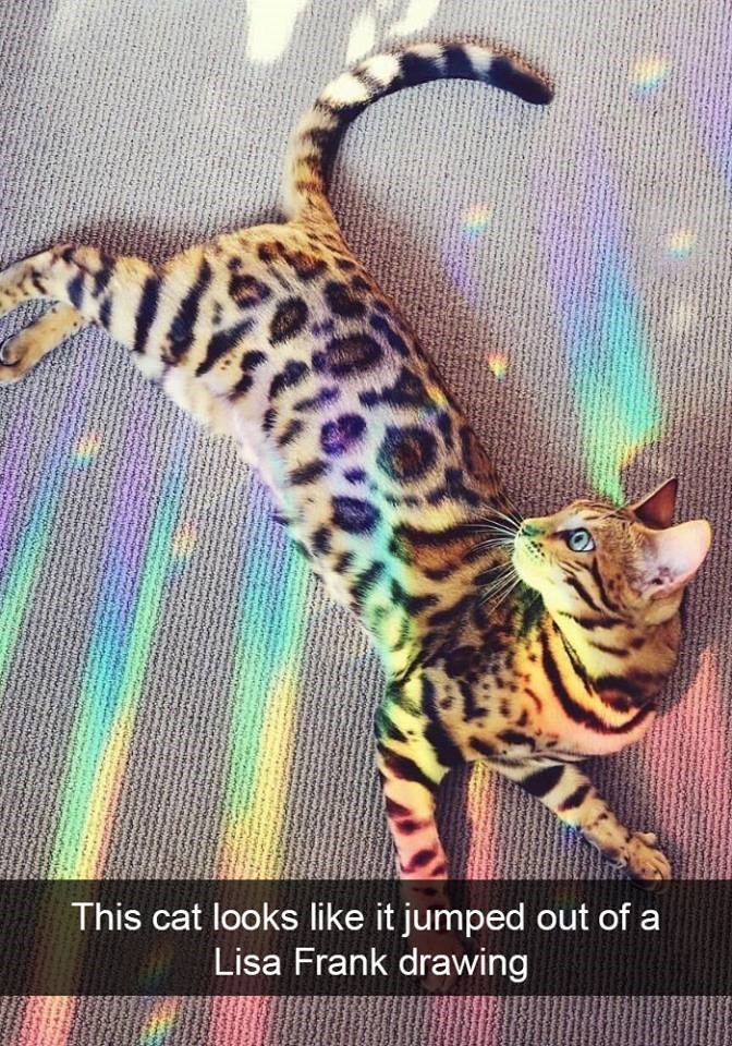 Cat - This cat looks like it jumped out of a Lisa Frank drawing WwShne wwww.bic Pww MLVA