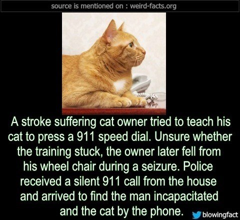 Cat - source is mentioned on: weird-facts.org A stroke suffering cat owner tried to teach his cat to press a 911 speed dial. Unsure whether the training stuck, the owner later fell from his wheel chair during a seizure. Police received a silent 911 call from the house and arrived to find the man incapacitated and the cat by the phone. blowingfact