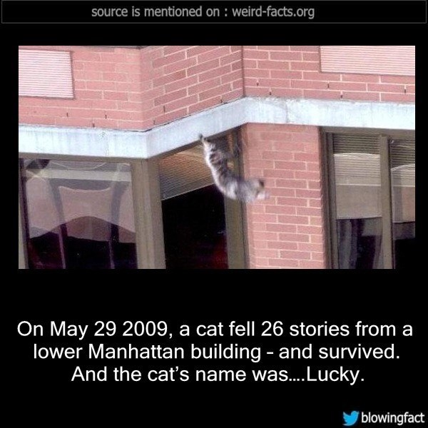 Property - source is mentioned on : weird-facts.org On May 29 2009, a cat fell 26 stories from a lower Manhattan building and survived. And the cat's name was...Lucky. blowingfact