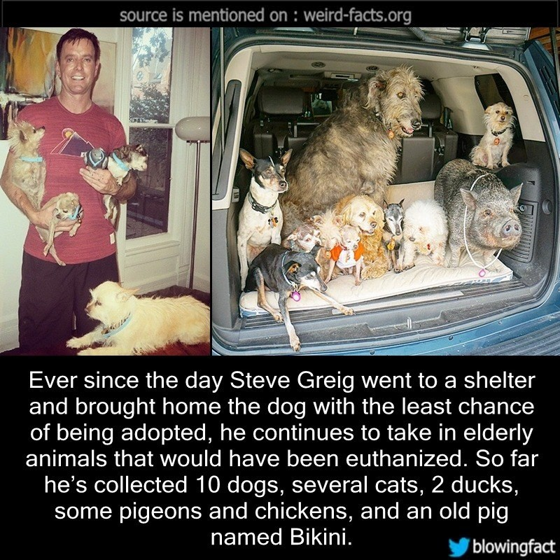 Photo caption - source is mentioned on weird-facts.org Ever since the day Steve Greig went to a shelter and brought home the dog with the least chance of being adopted, he continues to take in elderly animals that would have been euthanized. So far he's collected 10 dogs, several cats, 2 ducks, some pigeons and chickens, and an old pig named Bikini. blowingfact