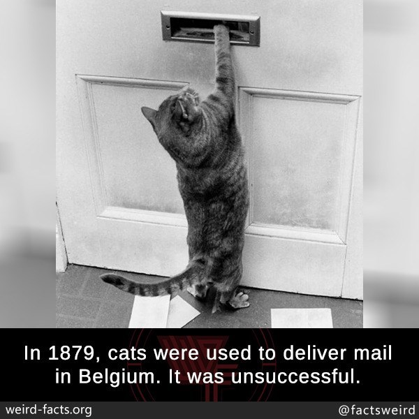 Cat - In 1879, cats were used to deliver mail in Belgium. It was unsuccessful. weird-facts.org @factsweird