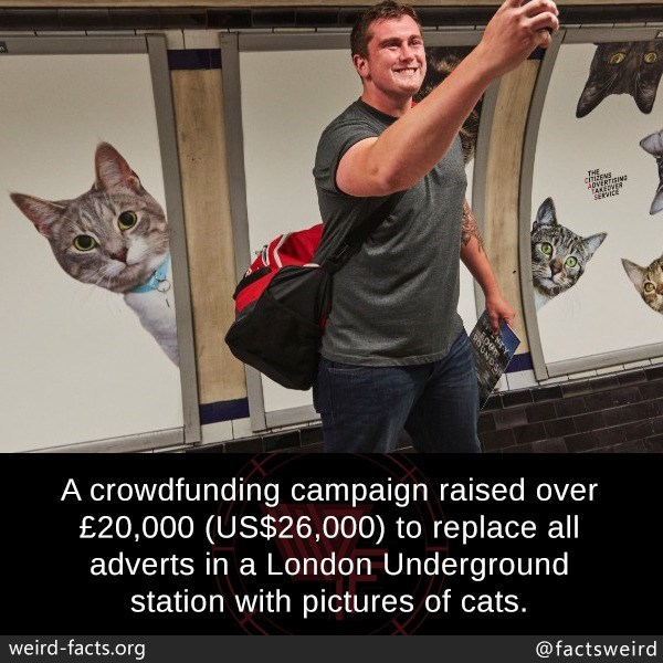 Cat - THE cTISEMS APVERTISIN TAKEDNER SERICE A crowdfunding campaign raised over £20,000 (US$26,000) to replace all adverts in a London Underground station with pictures of cats. weird-facts.org @factsweird