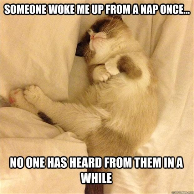 cat meme about getting mad at someone if they woke you up from your nap