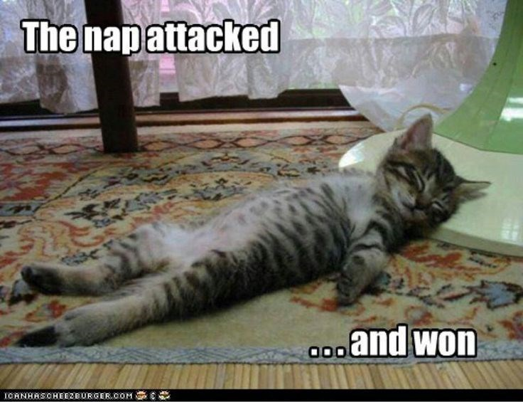 cat meme of a cat peacefully napping