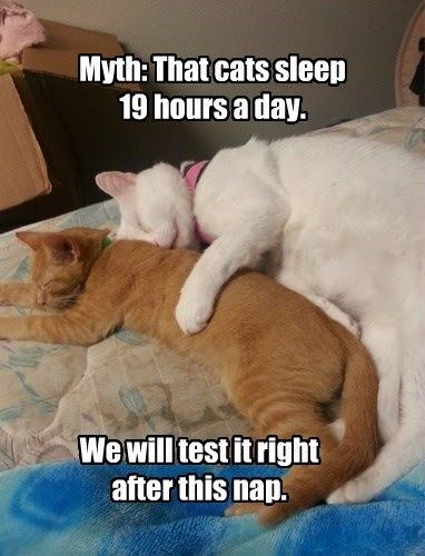 meme about cats napping all day