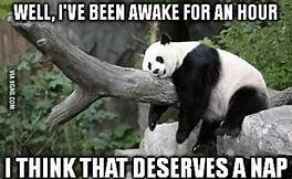 meme of a panda napping on a tree trunk
