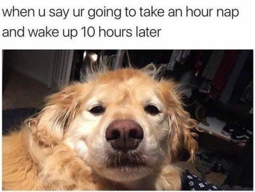 dog meme about napping for too many hours