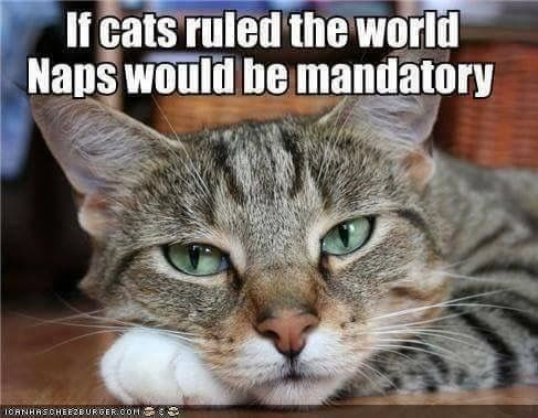 meme about cats making napping mandatory if they ruled the world