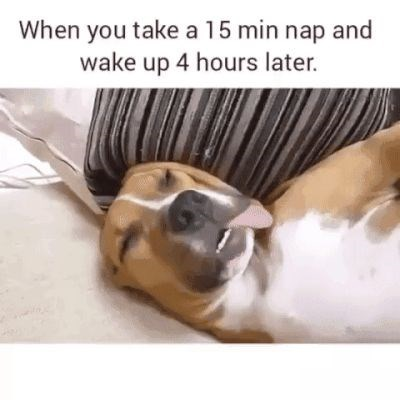 dog meme about sleeping longer then you had intended