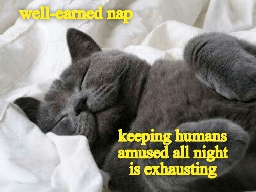 cat meme sleeping peacefully in a humans bed