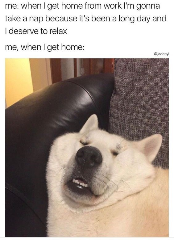 dog meme about napping as soon as you get home from work