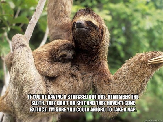 sloth meme about not worrying about your life because sloths don't