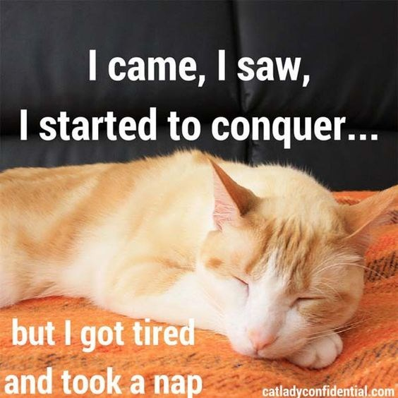 cat meme about trying to stay awake but end up napping