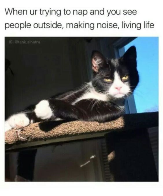 cat meme about trying to nap and people are disturbing you