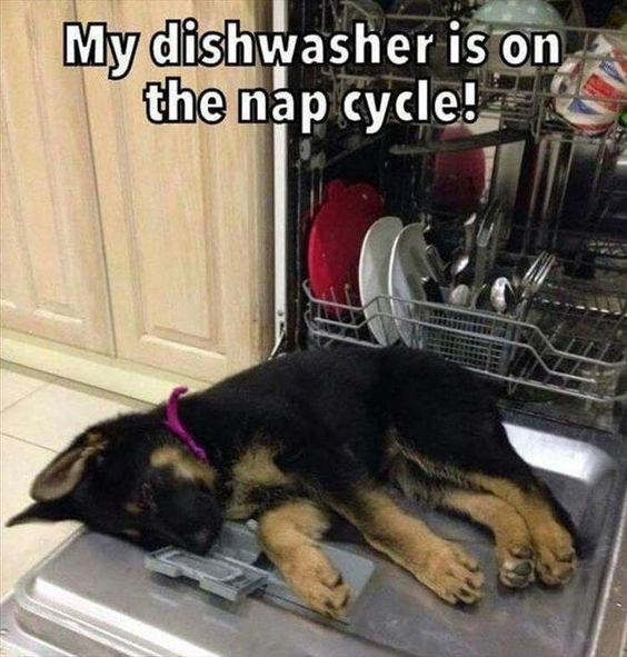 pic of a dog sleeping an open dishwasher door