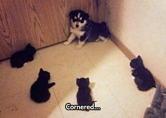 wrong neighborhood meme of of a puppy surrounded by kittens