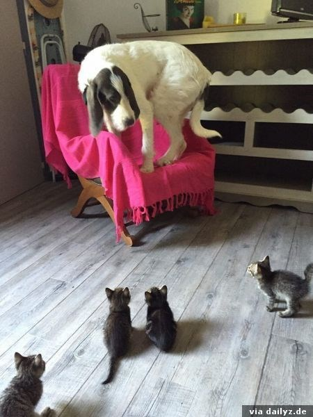 wrong neighborhood meme of a dog surrounded by kittens