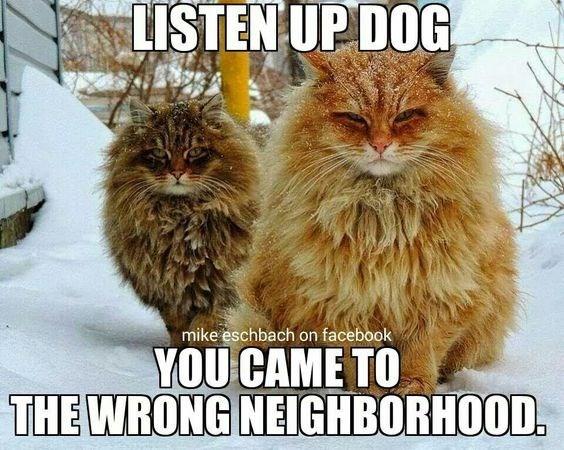 wrong neighborhood meme of cats staring menacingly