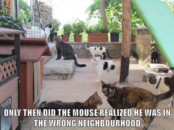 wrong neighborhood meme of cats staring at the camera